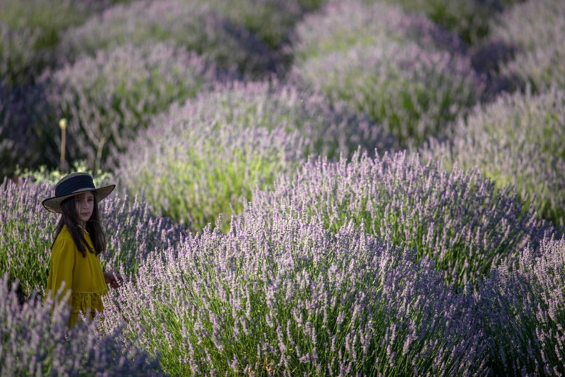 <p>Село Куючак произвежда 93 на сто от цялата лавандула, произведена в Турция, на 3000 дка земя.</p>  <p>&nbsp;</p>