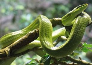 16 юли е Световен ден на змията