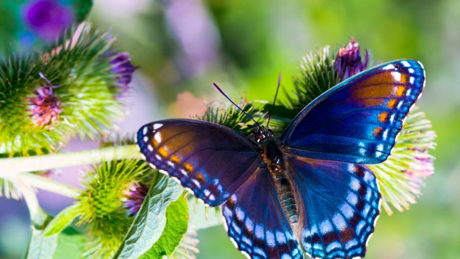 Пеперуди в Коста Рика – отглеждане на Caterpillar в световните градини