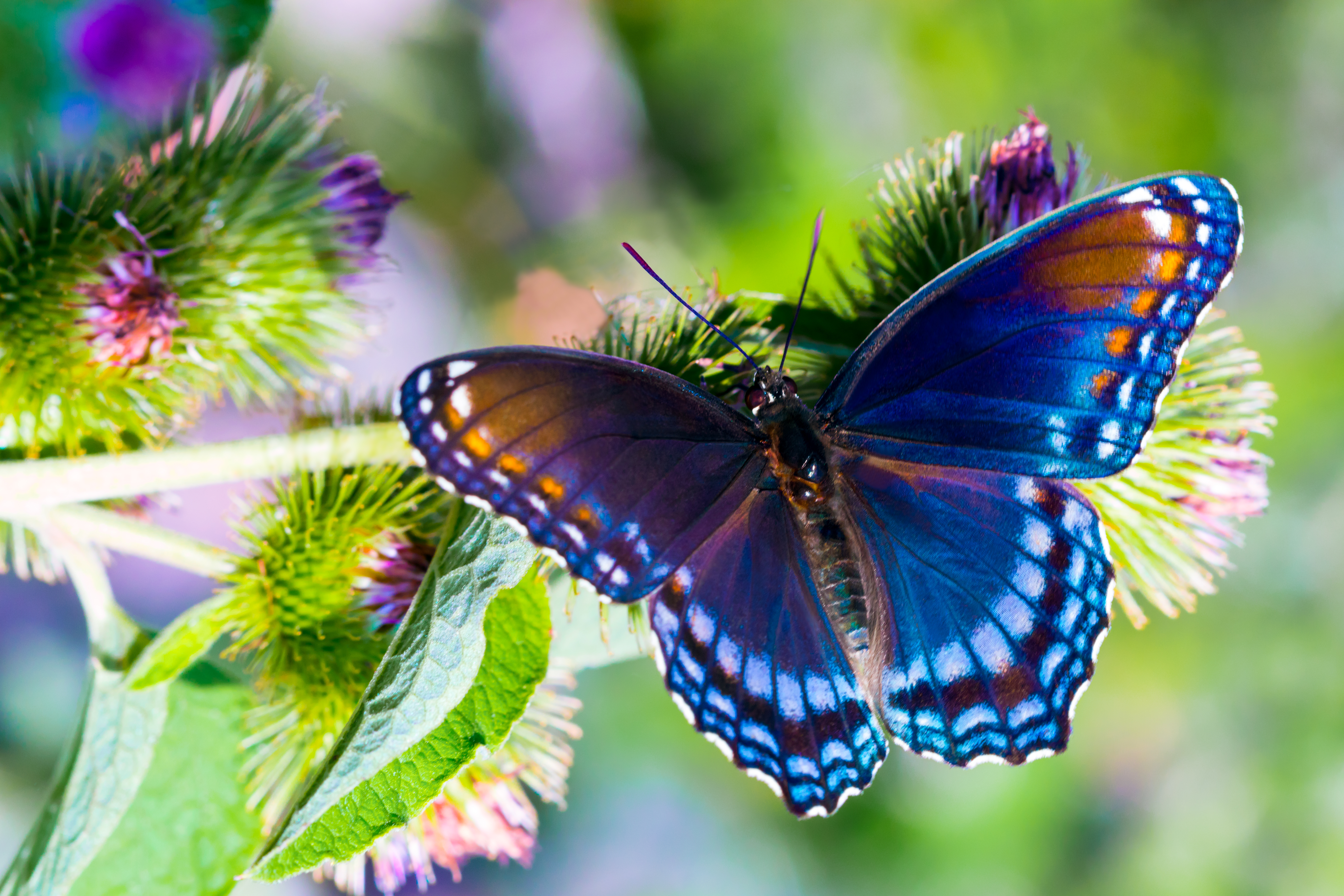 <p><strong>Пеперуди</strong>&nbsp;- Те обичат плодове и цветен нектар и за разлика от други насекоми, те отчаяно търсят алкохол. Пияните пеперуди не могат да се движат и застават на едно място, а ако се опитат да летят, обикновено не приключват добре. Замаяните животни могат да бъдат хванати лесно от хората, заради притъпените им сензори, които няма да засекат дори движение.&nbsp;</p>  <p>&nbsp;</p>