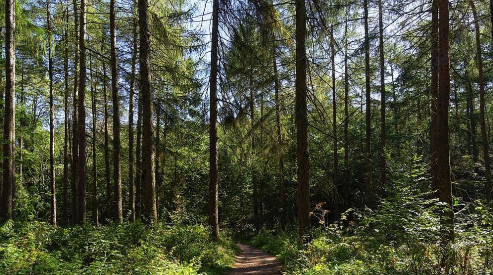 Полицаи откриха възрастен мъж, изгубил се в гората