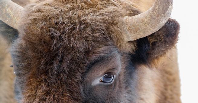 Центърът за защита на природата и животните в Добрич посрещна
