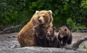 Необичайна услуга: Зоопарк във Финландия предлага