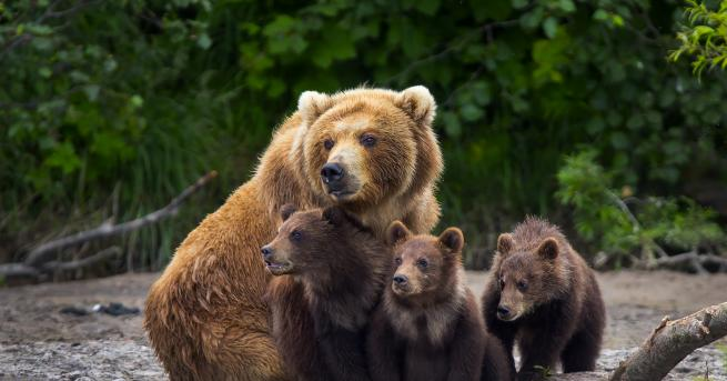 Любопитно Необичайна услуга: Зоопарк във Финландия предлага