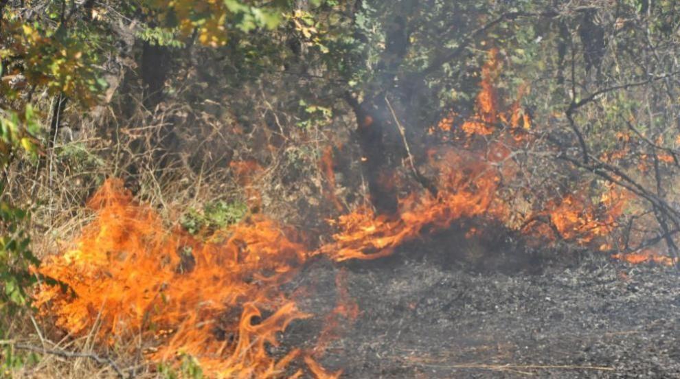Пожарът в Хасковско се разраства (ВИДЕО)