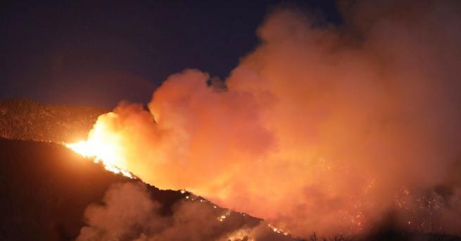 Пожар гори в борова гора над кв.