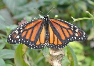 Коста Рика - страната на пеперудите