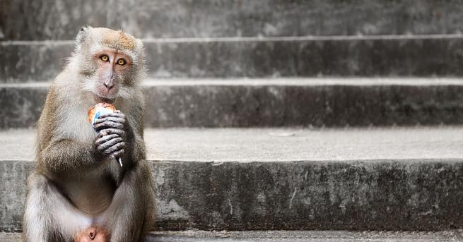 Маймуни саймири в Лондонския зоопарк се разхлаждат в горещините със
