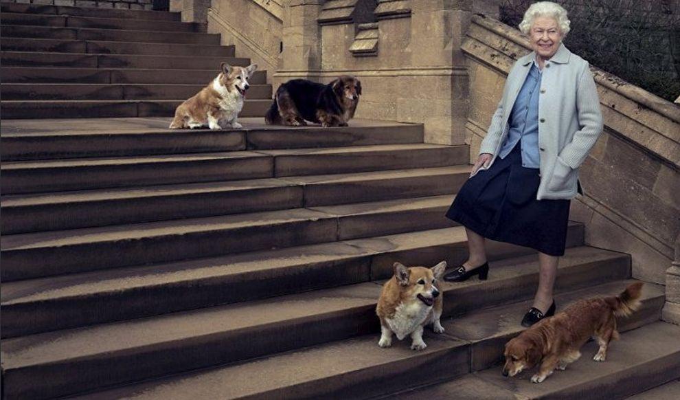 <p><strong>2. Кралските коргита</strong></p>  <p>Най-привилегированата част от двора са кралските кучета от породата корги. Елизабет II обожава домашните си любимци, за тях почти няма забрани . Кучетата могат дори да спят на леглото, но никой не може да им повишава тон , а храната им се приготвя лично от главния готвач на Бъкингамския дворец.</p>