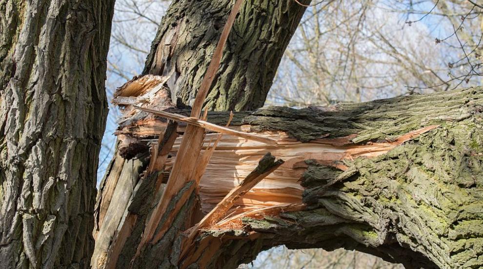 Дърво падна върху дете в пловдивски парк