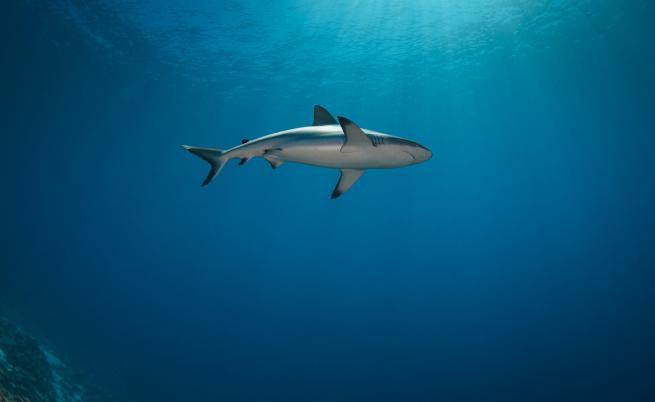 Любопитни факти за акулите, които ще ви изумят