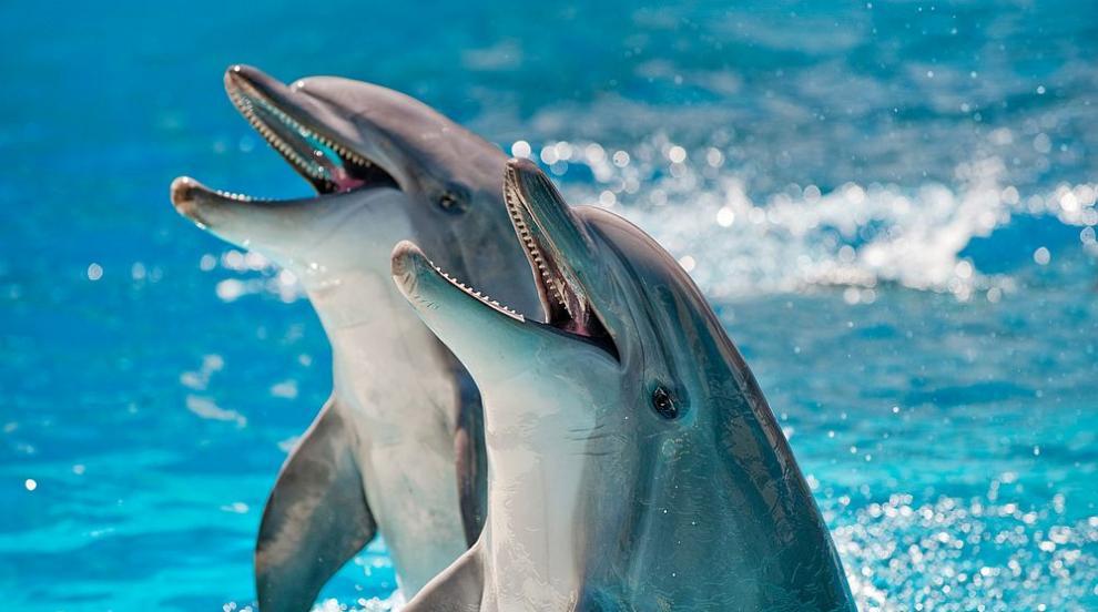 Делфини от застрашен вид се завръщат край Хонконг...
