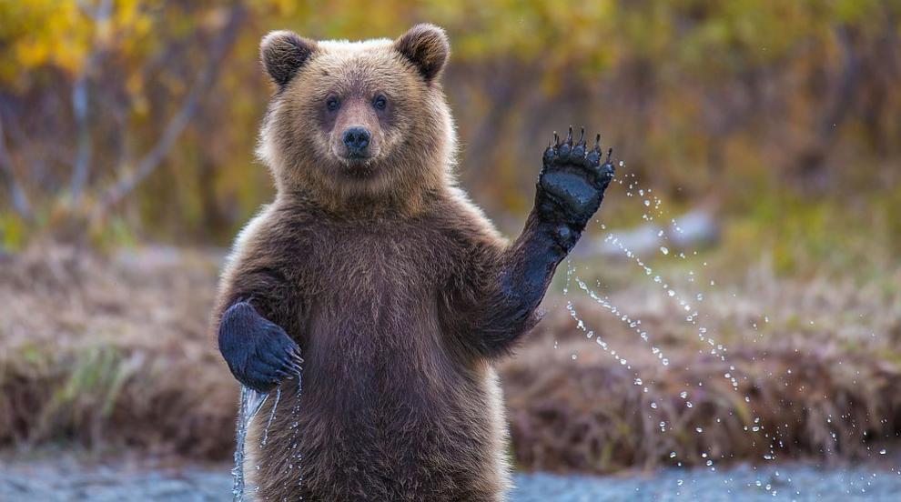 Паркът за танцуващи мечки край Белица има нов обитател