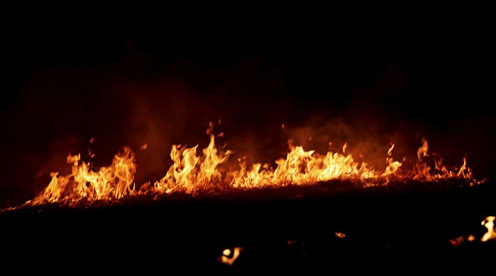 30 декара борове горят край Шумен