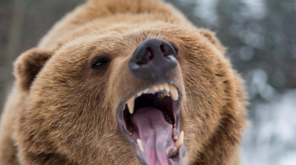 84-годишна бабка изръмжа страшно и подплаши мечка