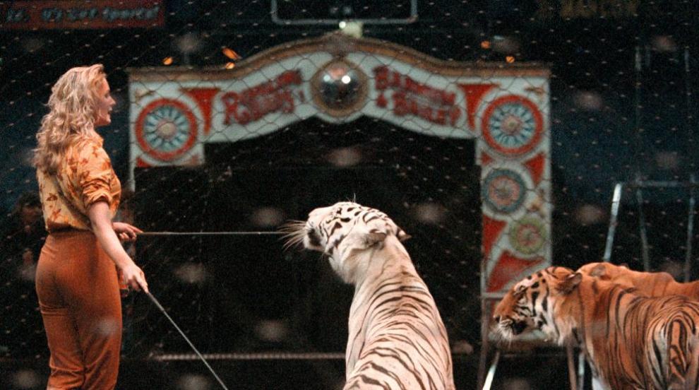 Без диви животни във френските циркове, забраняват...