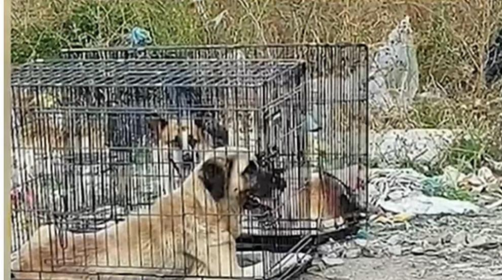 Жестокост: Изхвърлиха кучета в клетки на сметището в...