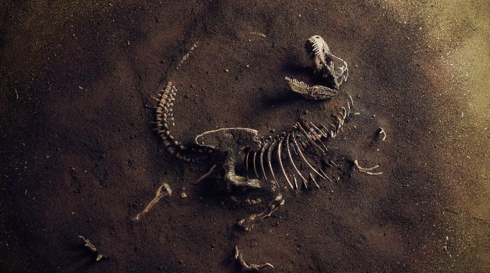 Древните бозайници били мързеливи и живеели много...