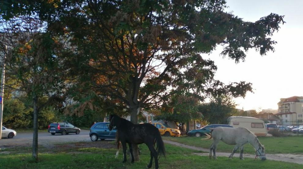 """Стадо коне си пасе в """"Люлин 9"""", има пострадали хора и..."""
