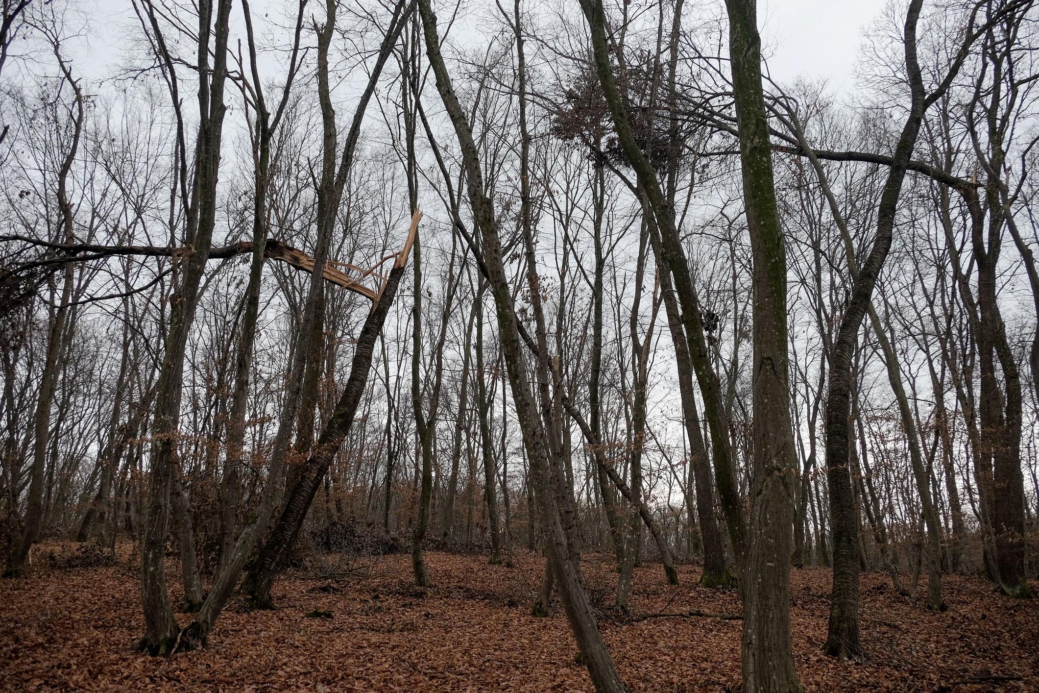 <p>Смели туристи обикалят гората през нощта, но мнозина съобщават, че изпитват странно чувство на безпокойство, гадене и чувството, че са наблюдавани.</p>