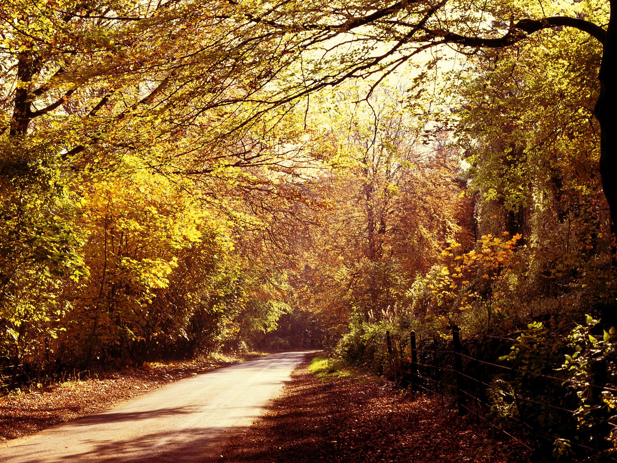 <p><strong>Гората Уичууд в Оксфордшир, Англия</strong></p>  <p>Тези, които са влизали в гората твърдят, че са виждали доста стряскащи неща &ndash; от плачещи деца до преминаваща карета с коне и докосване от непозната ръка. Легенда разказва за призрака на Ейми Робсарт &ndash; съпругата на графа на Лестър.</p>