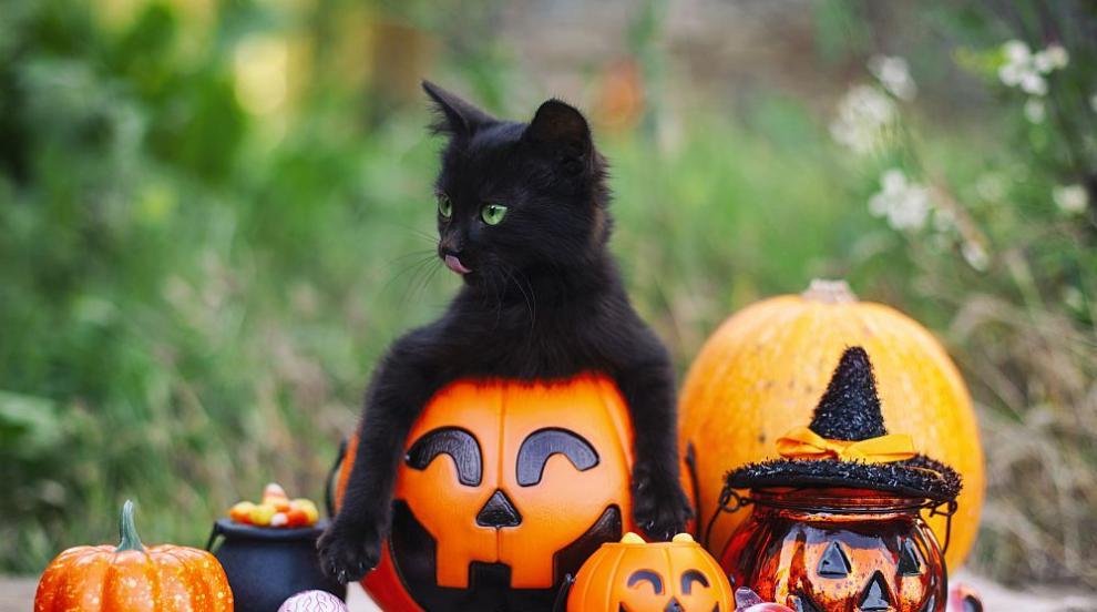 Черните котки - от слуги на дявола до божествени...