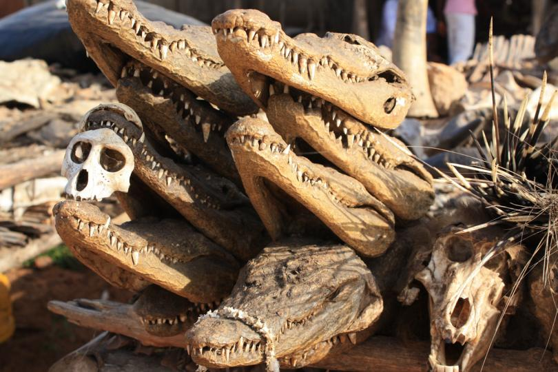 <p><strong>Вуду-пазарът в Ломо, Того</strong><br /> <br /> Този може би най-интересен пазар в света се намира в Того, Западна Африка и е особено търсен сред любителите на магията. Тук се продават черепи на животни, живеещи в региона, като крокодили, влечуги, маймуни, змии.</p>
