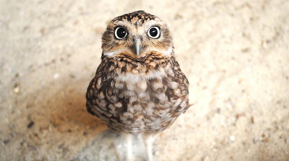 Откриха сова в клоните на коледната елха в Ню Йорк...