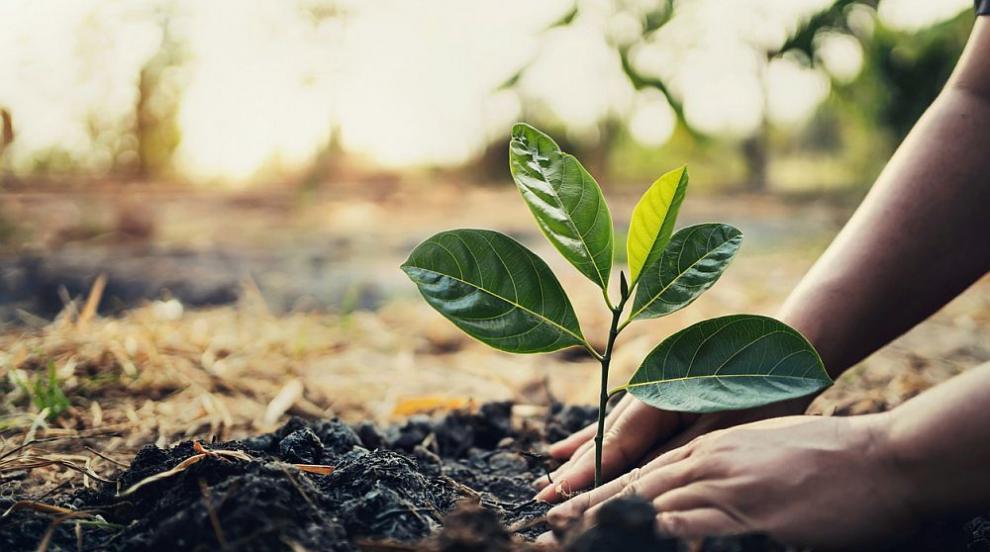 Държавното горско стопанство в Добрич ще засади гора...