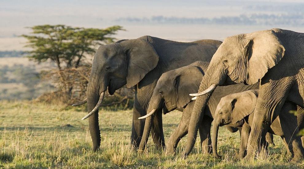 Животните, които обитават Земята по-дълго от човека...