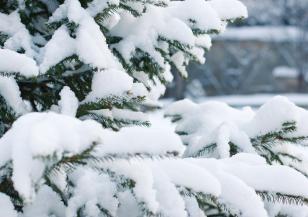 Страната се събуди под снежна пелерина