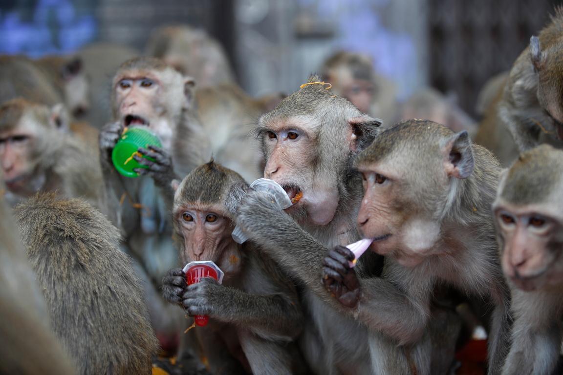 <p>Тайланд - родина на необичайни традиции и празници.</p>