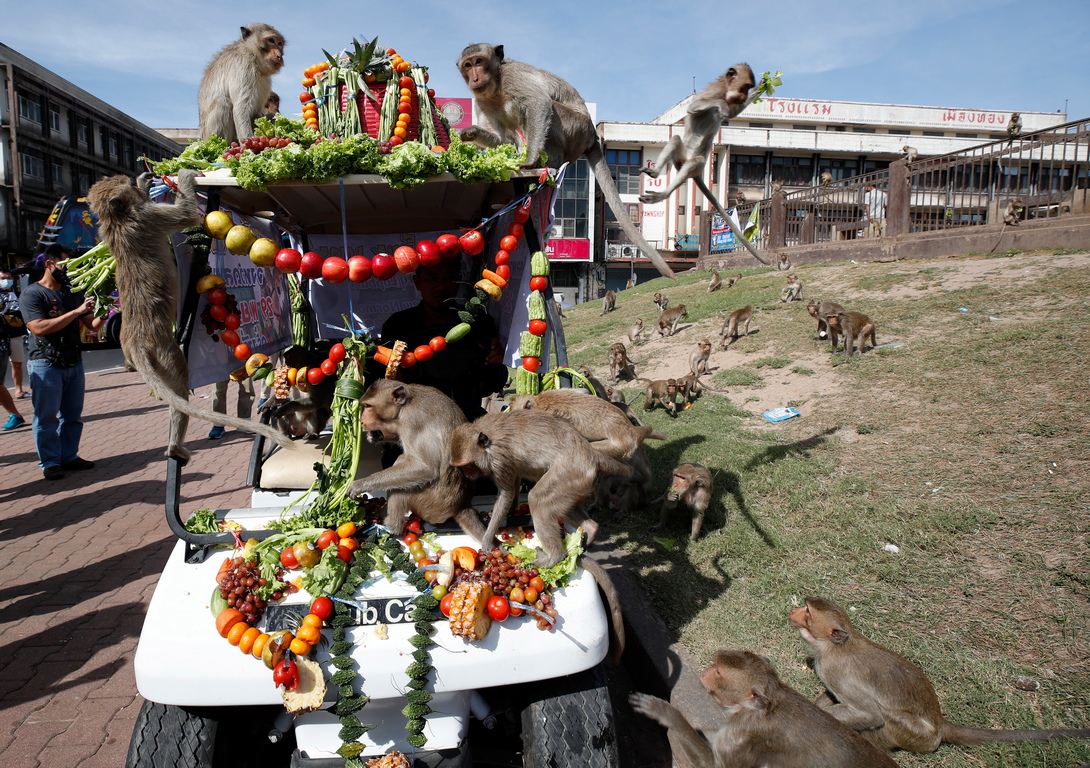 <p>Фестивал &quot;Маймунски банкет&quot; в Тайланд</p>