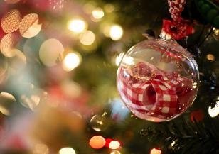Коледни елхи грейнаха в страната