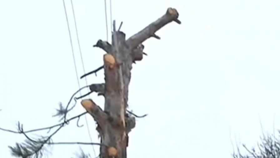 <p>Мъж обвинява енергото в изсичането на дръвчета в двора му</p>