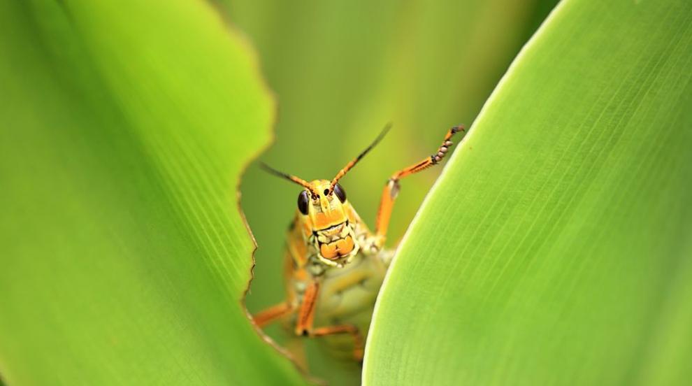 Учени алармират за апокалипсис за насекомите
