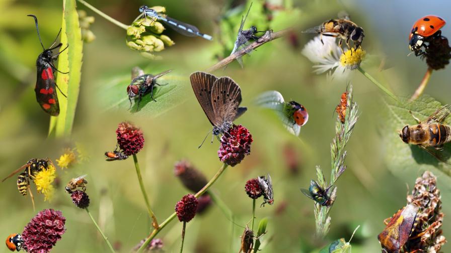 <p>Учени алармират: Настъпва апокалипсисът на насекомите</p>