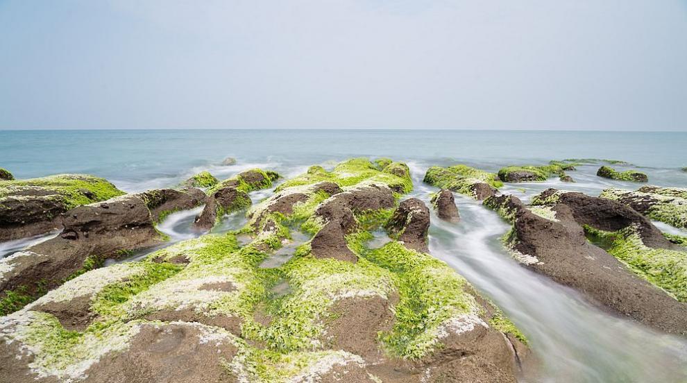 Тайванските коралови рифове агонизират