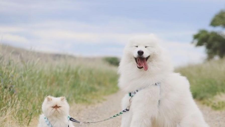Усмихнато куче и намръщено коте станаха хит в интернет