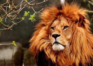Наследството на царя на животните