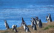 пингвини