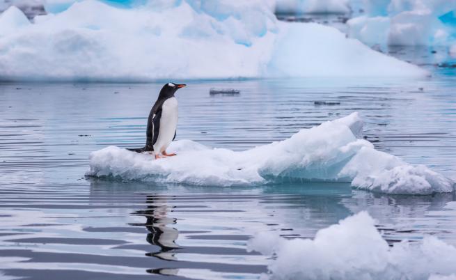 Пингвин се спаси от косатки, скачайки в лодка с туристи