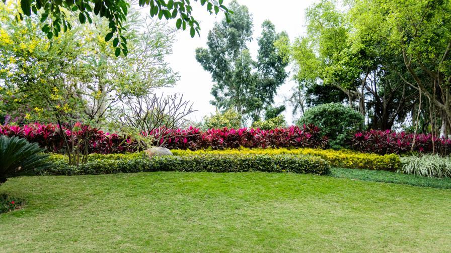 Какво има в градината на най-отровните растения
