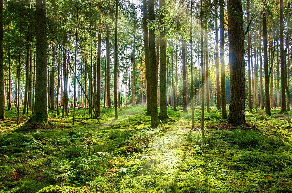 Седмицата на гората се отбелязва у нас всяка първа пълна седмица на април още от 1925 г., когато е въведен осмият за България Закон за горите.