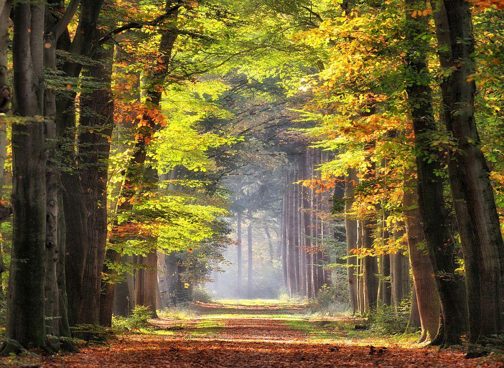 На 5 април 2021 г. започна ежегодната седмица, посветена на гората.