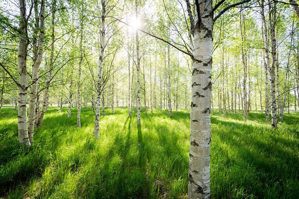 Загубата на гори означава и загуба на незаменими местообитания за животинския и растителен свят.