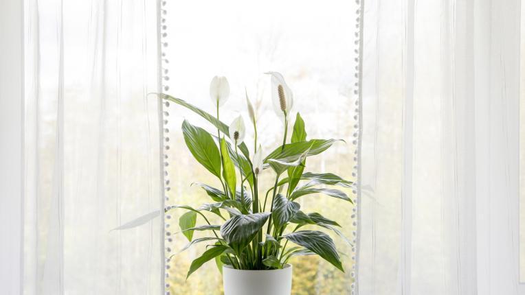 6 растения, които привличат щастието
