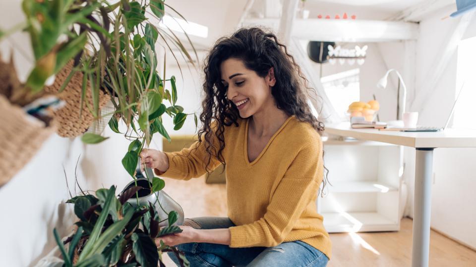 жена растения цветя