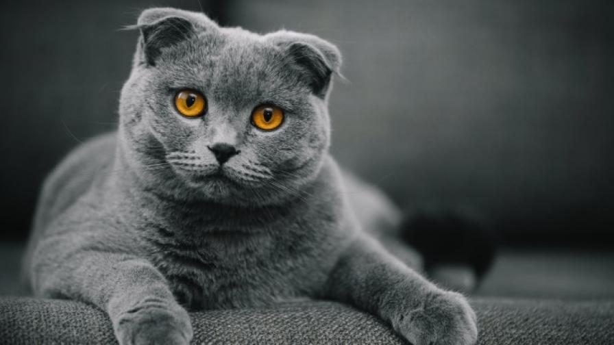 Как да разберете дали котката ви обича