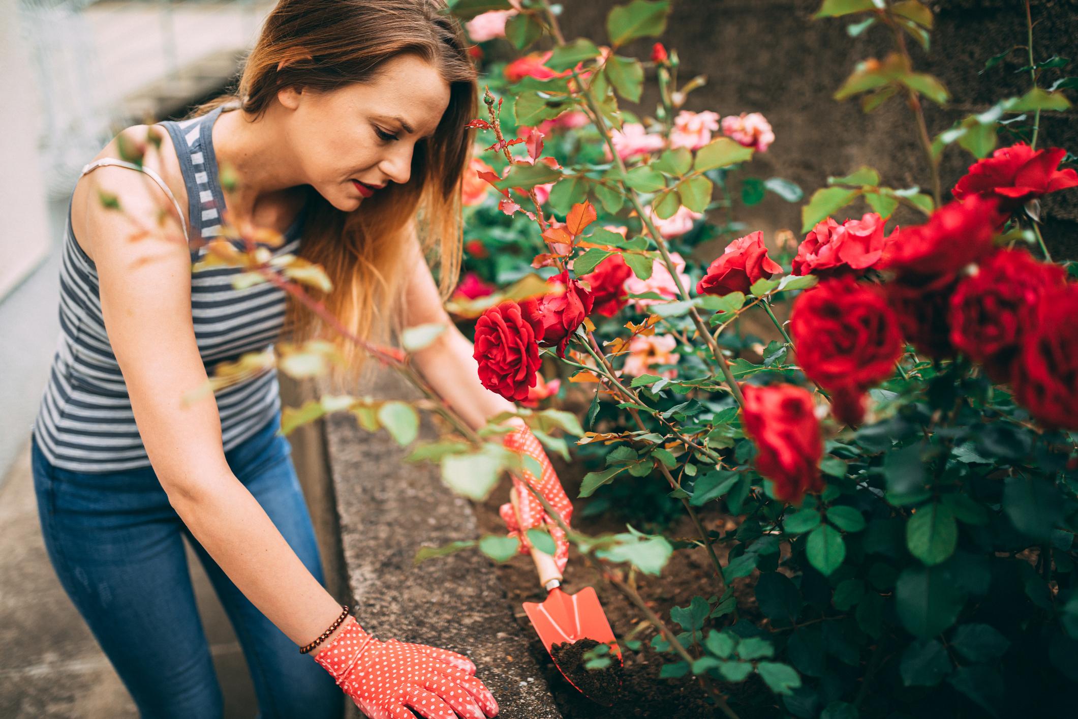 <p>Червена роза - тя означава &quot;любов&quot; - дълбока и безусловна.</p>